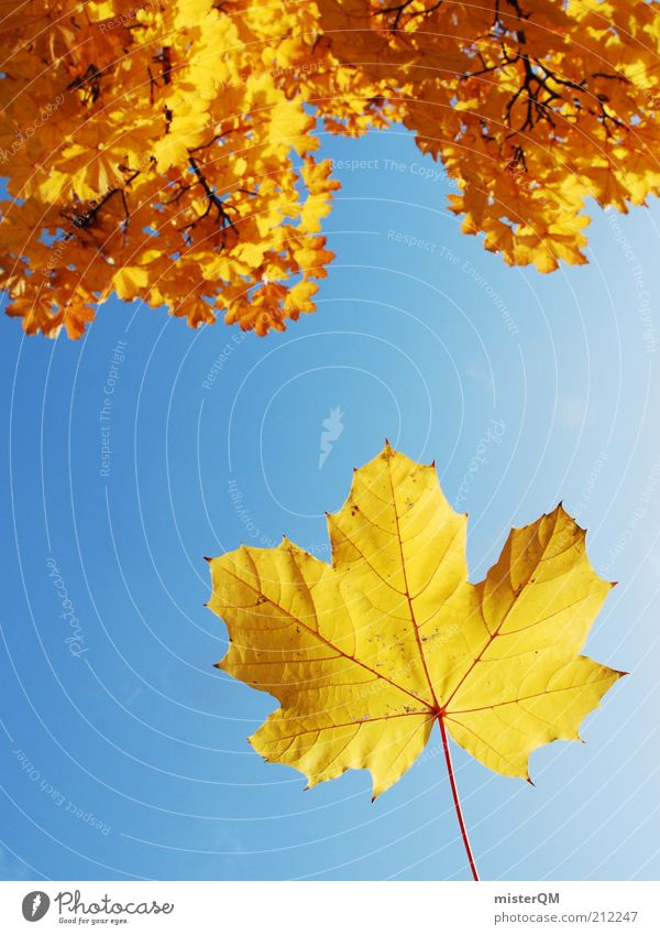 Autumn is just around the corner. Environment Nature Plant Sky Cloudless sky Climate Weather Beautiful weather Wind Tree Esthetic Autumn leaves Autumnal