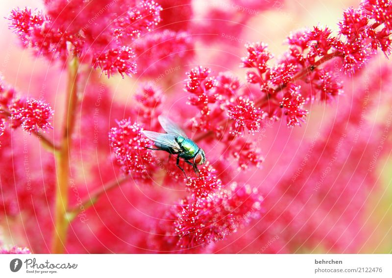 Nature Plant Summer Beautiful Flower Red Animal Eyes Blossom Meadow Garden Flying Pink Park Illuminate Wild animal
