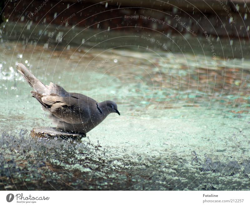 Water Animal Gray Bright Bird Wet Drops of water Animal face Wing Swimming & Bathing Natural Wild animal Damp Pigeon Refreshment
