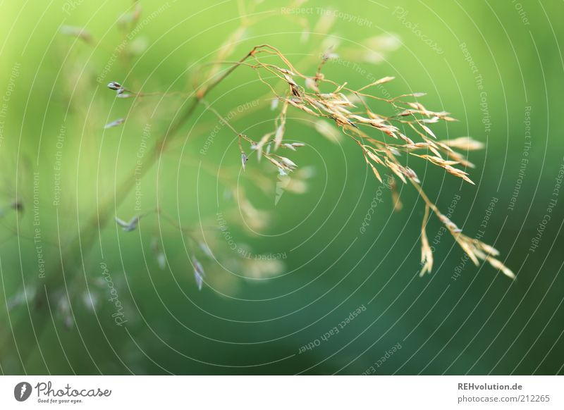 Nature Green Plant Life Grass Environment Esthetic Simple Thin Uniqueness Delicate Exceptional Easy Environmental protection Sustainability