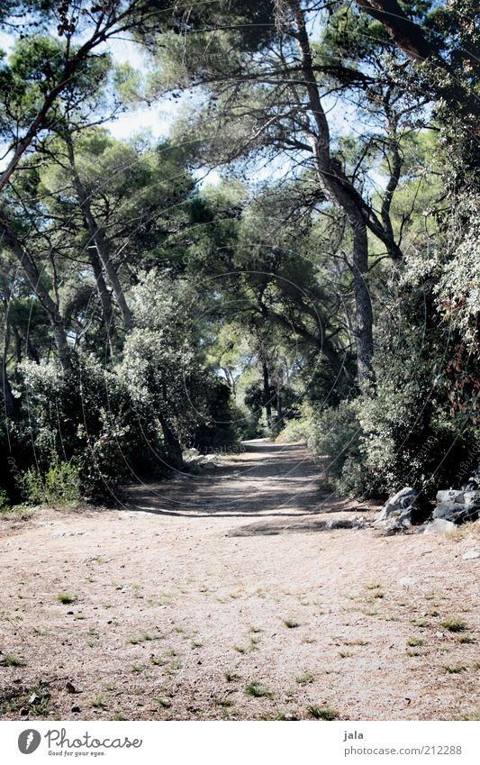 Nature Tree Plant Summer Calm Loneliness Forest Lanes & trails Warmth Bushes Dry Footpath Croatia Promenade Time Stone pine
