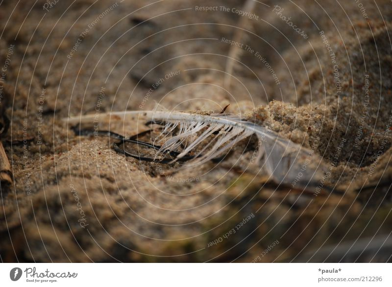stayed behind Nature Earth Sand Beach Feather Old Dirty Dark Small Wet Natural Brown Gray White Sadness Distress End Stagnating Transience Colour photo