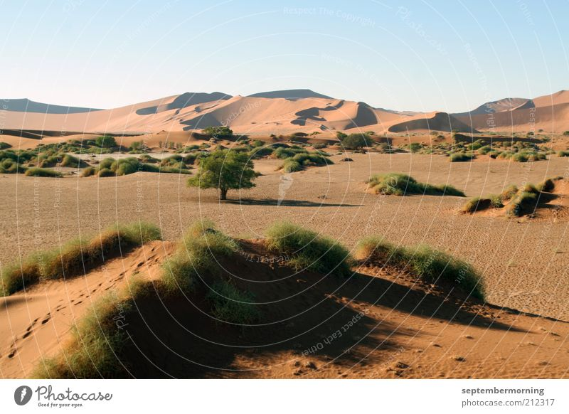 Calm Loneliness Freedom Sand Landscape Bushes Desert Tracks Hill Dune Beautiful weather Safari Cloudless sky Tuft of grass