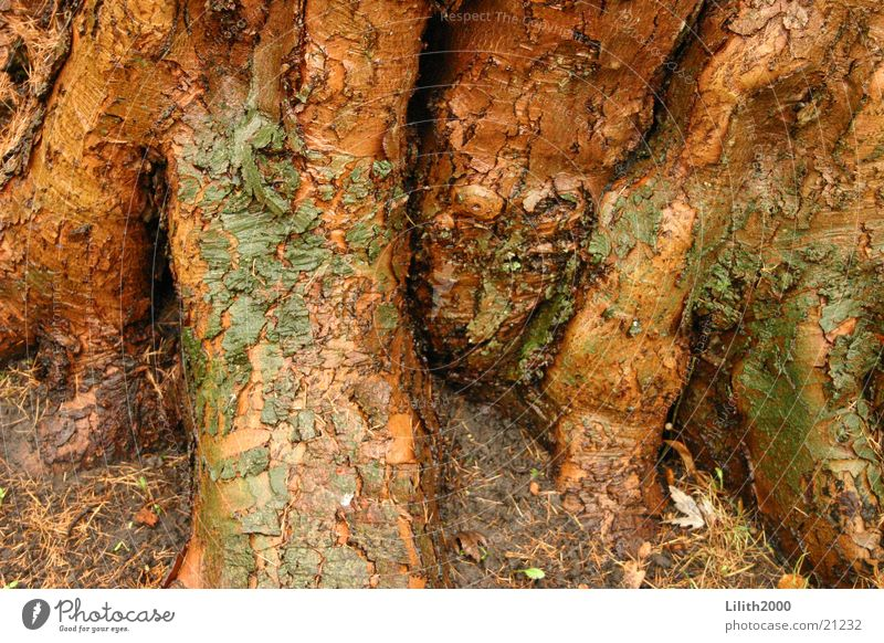 Old tree Tree Tree bark Brown Plant Park Nature