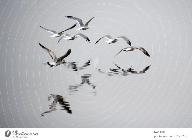 Seagulls in the fog Environment Nature Animal Elements Air Water Spring Fog Lakeside Baltic Sea Wild animal Bird Gull birds Group of animals Emotions Glide Wing