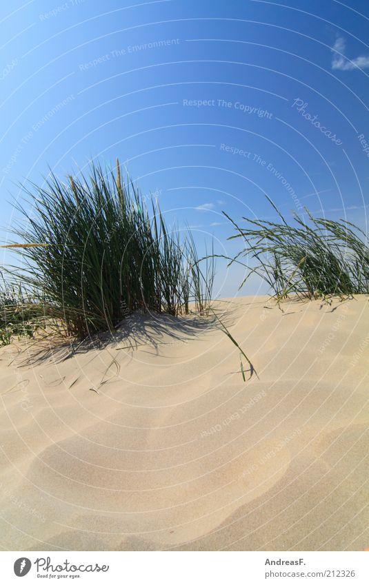 Nature Blue Plant Summer Beach Far-off places Grass Freedom Warmth Sand Landscape Coast Wind Beach dune Beautiful weather Blue sky