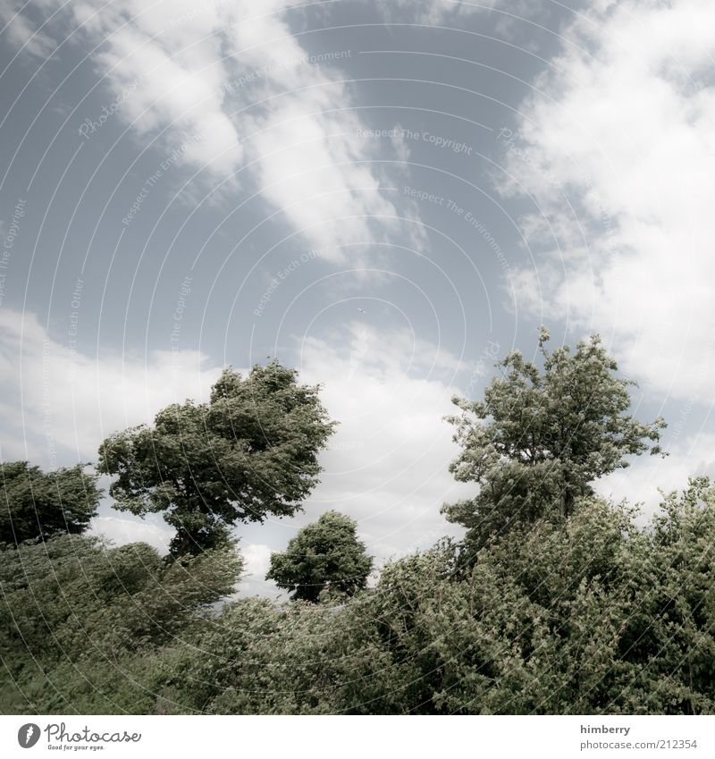 Sky Nature Tree Plant Summer Clouds Forest Environment Landscape Freedom Air Park Weather Wind Climate Bushes