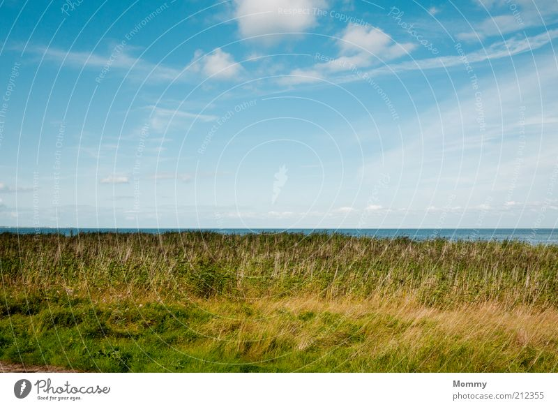 Water Sky Plant Summer Vacation & Travel Clouds Far-off places Relaxation Meadow Grass Landscape Coast Horizon Beautiful weather North Sea Blue sky