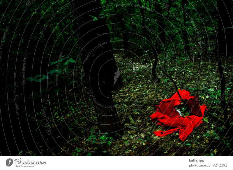 Nature Tree Red Forest Dark Sadness Landscape Environment Clothing Mysterious Creepy Force Hunting Fairy tale Eerie