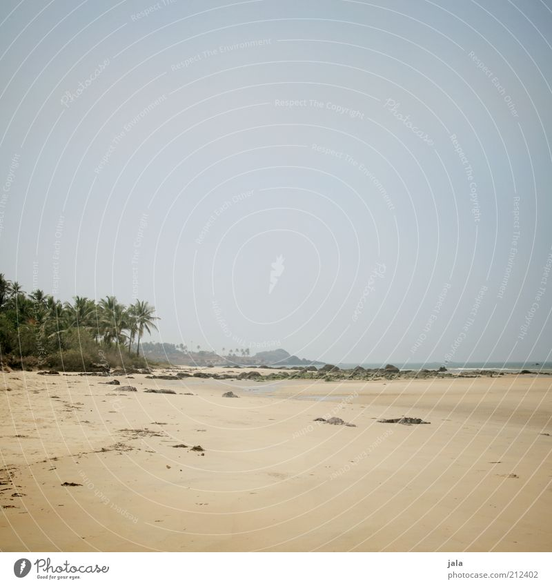 Sky Nature Tree Plant Summer Beach Vacation & Travel Ocean Far-off places Freedom Landscape Infinity Palm tree India Goa
