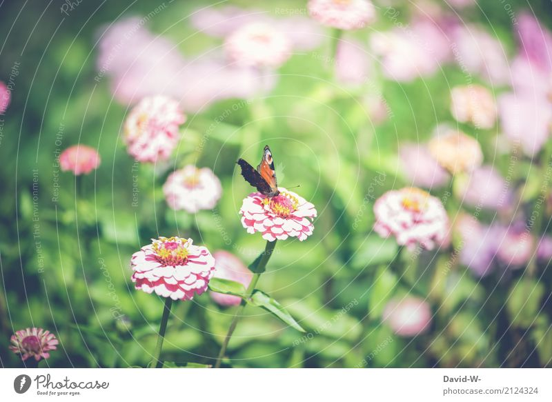 In the flower field Environment Nature Landscape Plant Animal Air Spring Summer Flower Leaf Blossom Foliage plant Garden Park Meadow Farm animal Butterfly 1