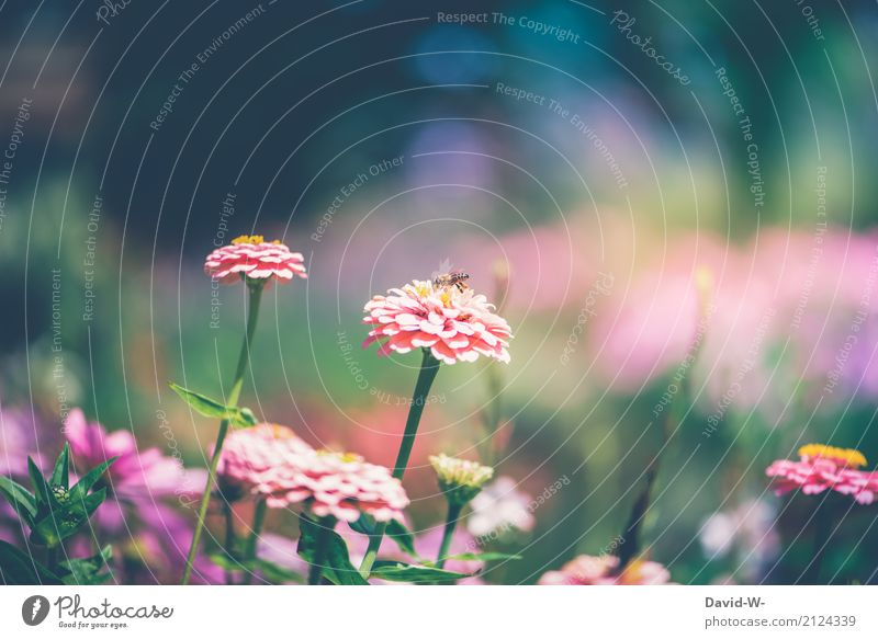 small bee Art Environment Nature Landscape Plant Animal Sun Spring Summer Climate Climate change Weather Beautiful weather Storm Warmth Flower Leaf Blossom