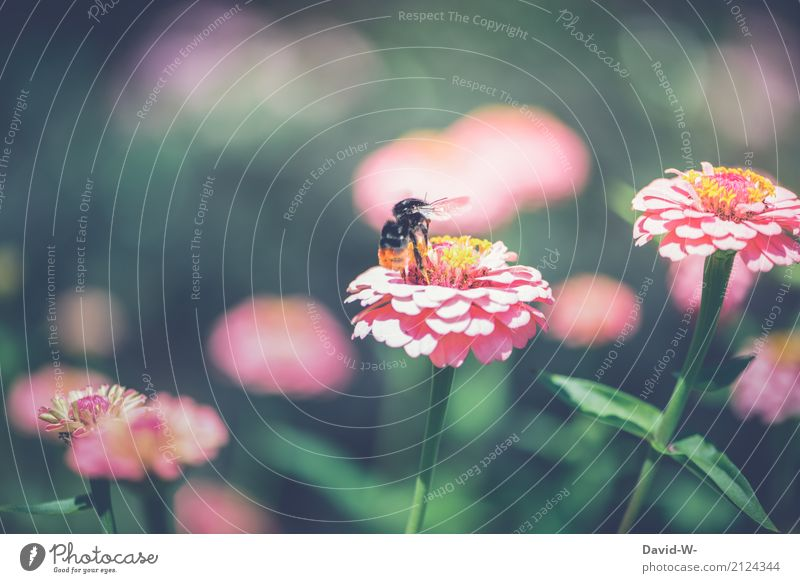 Bumble Bee Departure Environment Nature Landscape Plant Animal Sun Spring Summer Climate Climate change Weather Beautiful weather Warmth Flower Leaf Blossom
