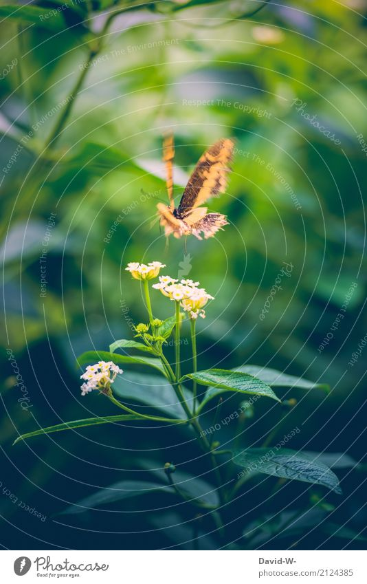 Look out, I'm coming. Art Environment Nature Landscape Plant Animal Air Sunlight Spring Summer Flower Blossom Foliage plant Garden Park Farm animal Butterfly 1