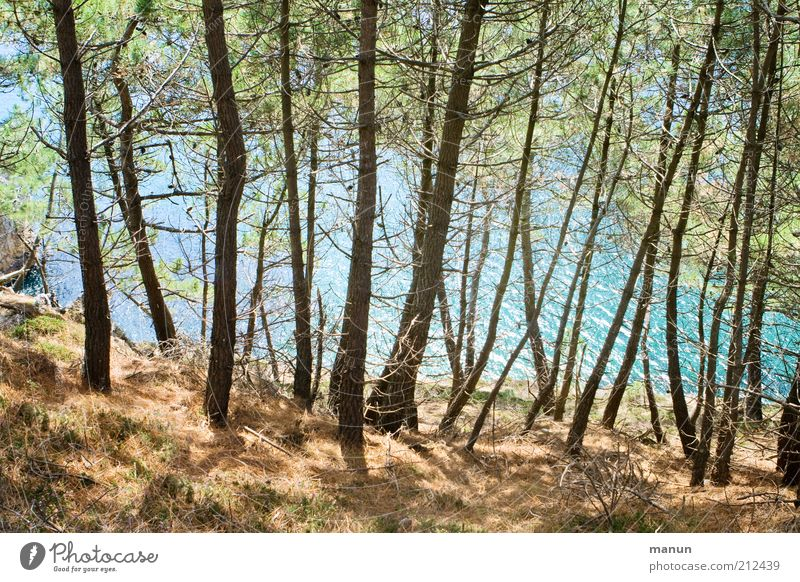 along the pine path Vacation & Travel Trip Nature Landscape Tree Pine Forest Hill Rock Coast Bay Ocean Cliff Exceptional Beautiful Wild Wanderlust Colour photo