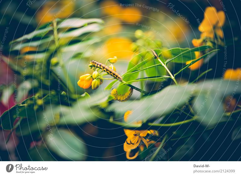 Nature Plant Summer Green Landscape Flower Leaf Animal Forest Environment Yellow Blossom Spring Meadow Art Garden