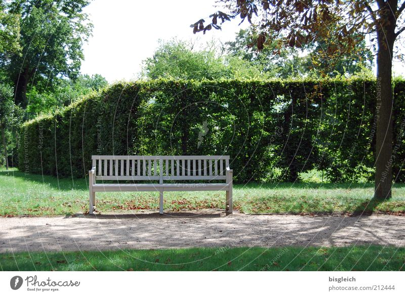 bench Relaxation Calm Hedge Park Garden Wood Green Bench Lanes & trails Colour photo Exterior shot Sunlight Shadow Park bench Deserted Tree Nature