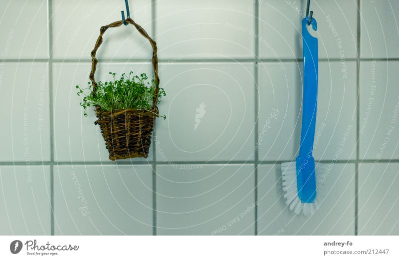 Blue Green Plant Grass Wood Brown Decoration Living or residing Healthy Eating Clean Kitchen Plastic Tile Thin Square Hang