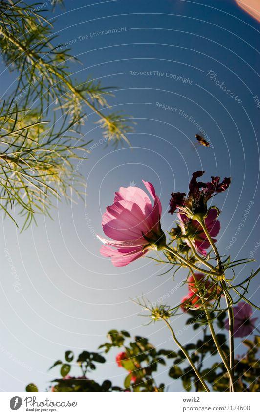 Nature Plant Blue Summer Green Animal Environment Blossom Garden Flying Above Pink Bright Illuminate Idyll To enjoy
