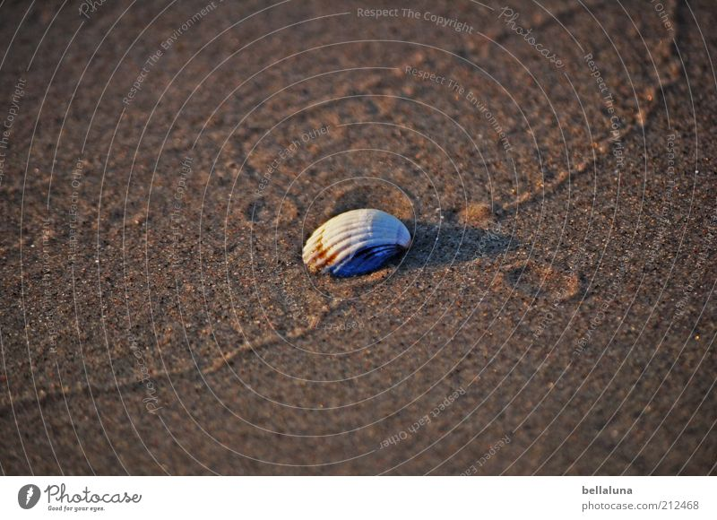 It's served... Vacation & Travel Summer Summer vacation Beach Ocean Environment Nature Sand Weather Beautiful weather Coast Baltic Sea Animal Wild animal Mussel