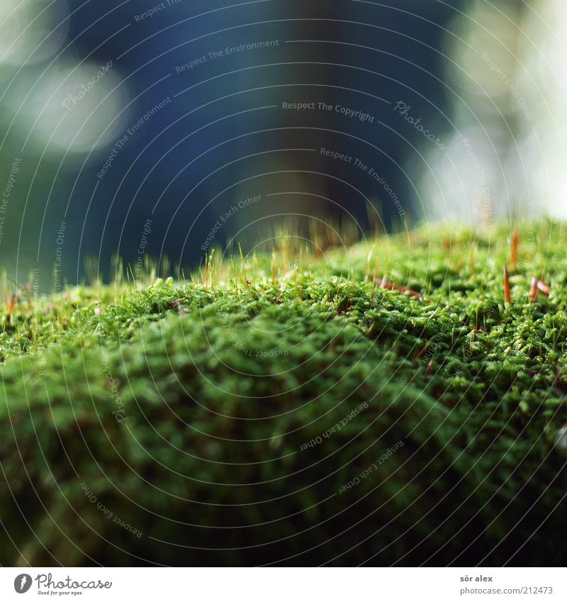 Nature White Green Blue Plant Summer Environment Wet Growth Soft Natural Moss Photosynthesis Habitat Carpet of moss