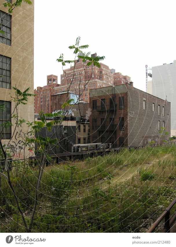 Highline Nature City Plant Green Summer White Tree Cold Grass Gray Brown Park Fear Growth High-rise Tall
