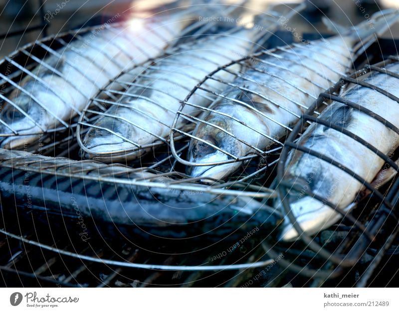 5 mackerels on the grill Food Fish Nutrition Lunch Dinner Organic produce Summer Feasts & Celebrations Barbecue (event) Fire Warmth Farm animal Dead animal