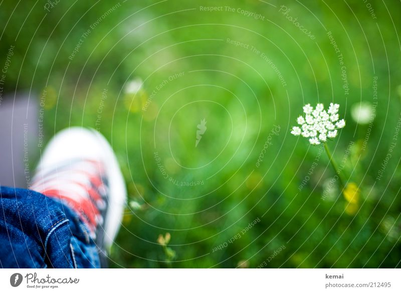 Shoe in the green Environment Nature Plant Summer Climate Beautiful weather Warmth Flower Grass Blossom Foliage plant Wild plant Common Yarrow Garden Park