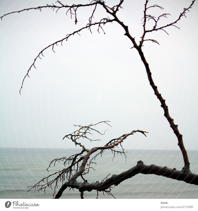 Scuse Me While I Kiss The Sky Beach Ocean Horizon Bad weather Fog Coast Baltic Sea Monument Dark Tall Death Loneliness Branch Distorted Branched Twig Log