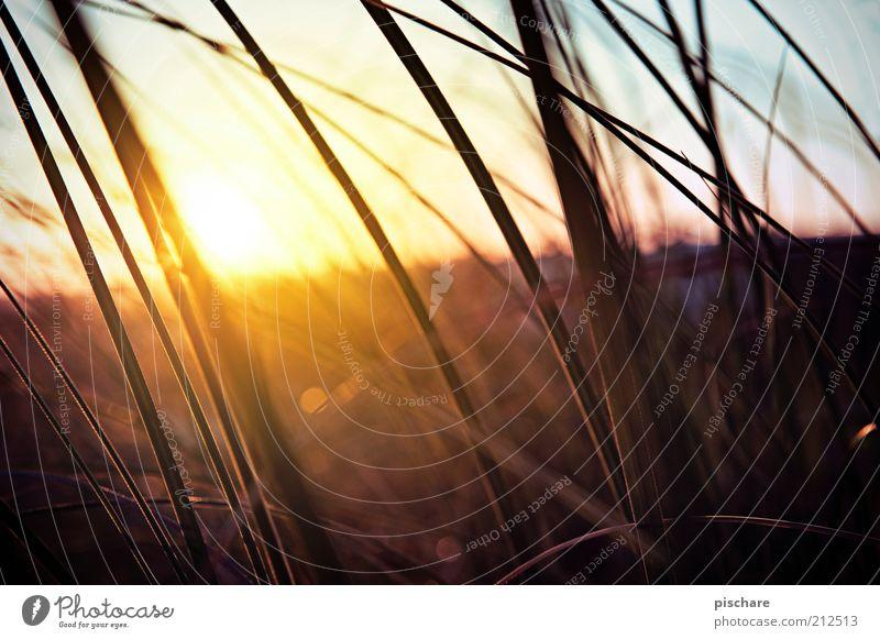 Feeling Good Environment Nature Landscape Sun Sunrise Sunset Sunlight Summer Beautiful weather Plant Grass Bushes Esthetic Kitsch Retro Warmth Happy