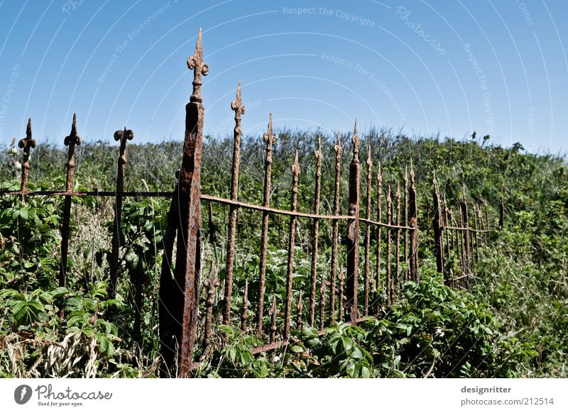 Calm Life Death Garden Sadness Growth Wild Bushes Hope Grief Change End Fence Eternity Shabby Belief