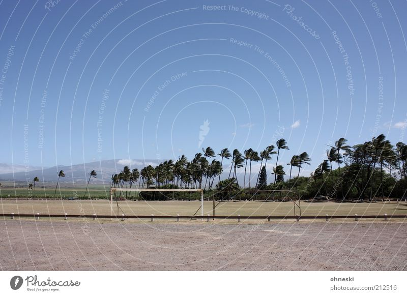 Pöhlen under palm trees Vacation & Travel Tourism Summer Summer vacation Soccer Sporting Complex Football pitch Goal Air Sky Palm tree Playing Colour photo