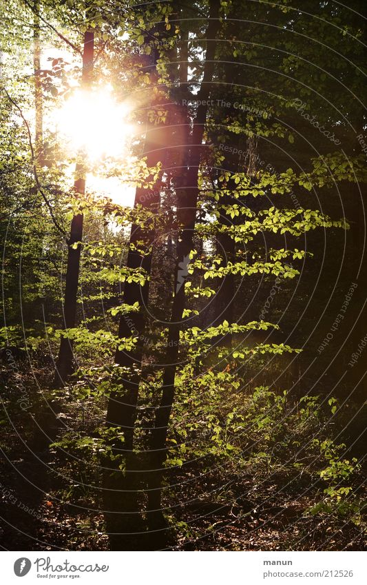 Lighting Trip Agriculture Forestry Environment Nature Landscape Earth Sun Summer Tree Deciduous tree Deciduous forest Mixed forest Natural Hope Sadness Grief