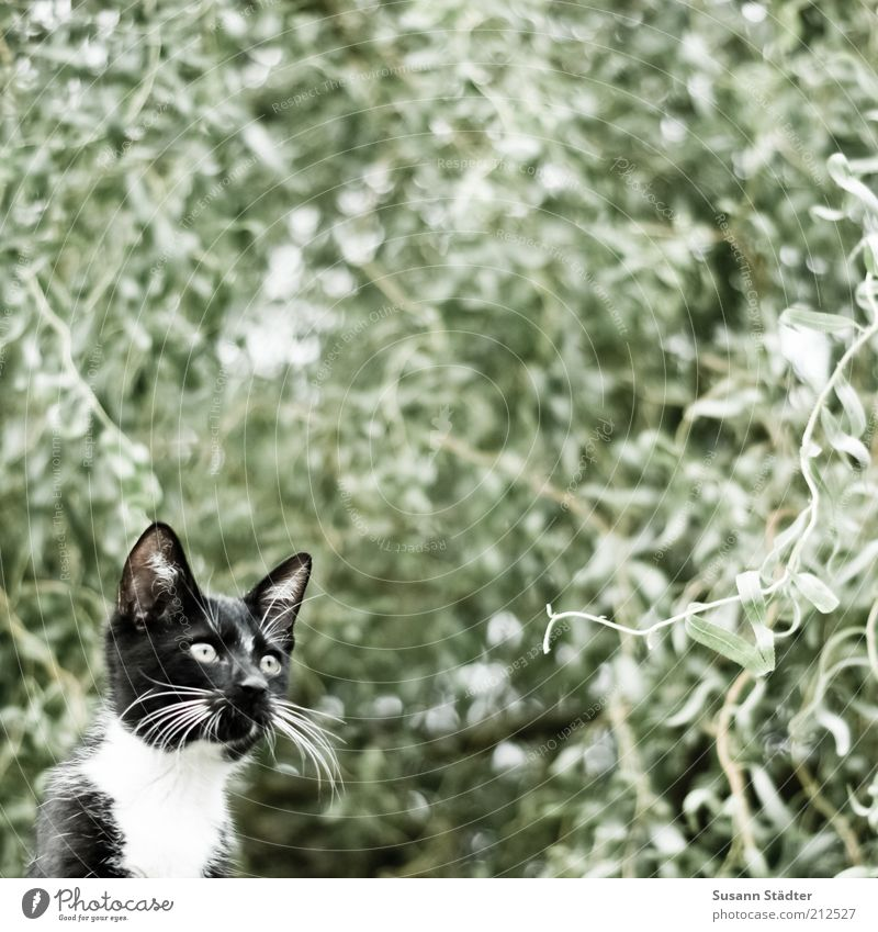 Nature Tree Black Animal Cat Think Wait Observe Pelt Concentrate Hunting Treetop Pet Frightening Camouflage Upward