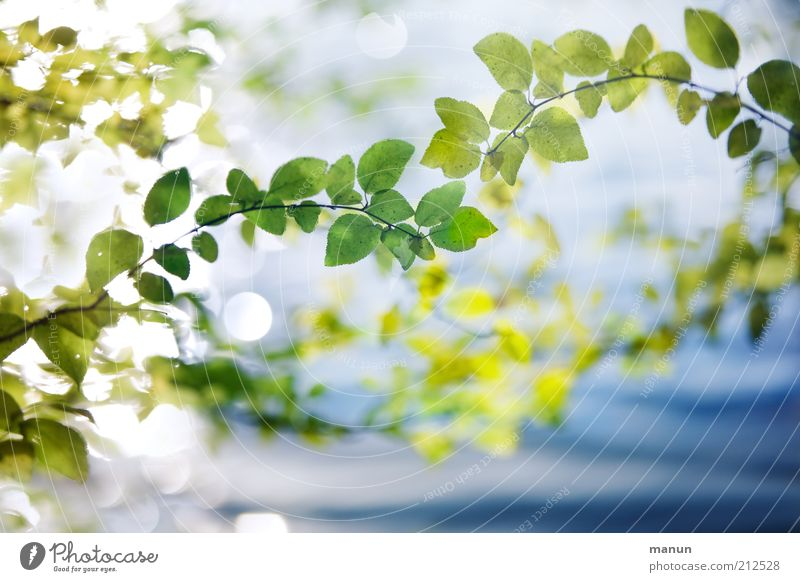 Nature Plant Beautiful Summer Leaf Environment Natural Bright Illuminate Growth Fresh Idyll Branch Transience Uniqueness Change