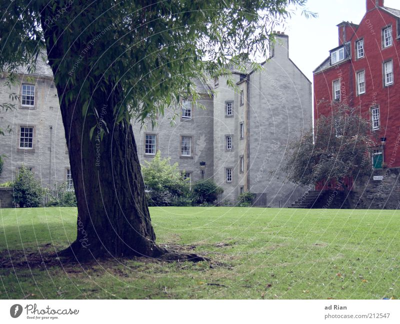 Rooted House (Residential Structure) Tree Grass Park Meadow Edinburgh Scotland Building Architecture Stairs Facade Sharp-edged Town Colour photo Exterior shot