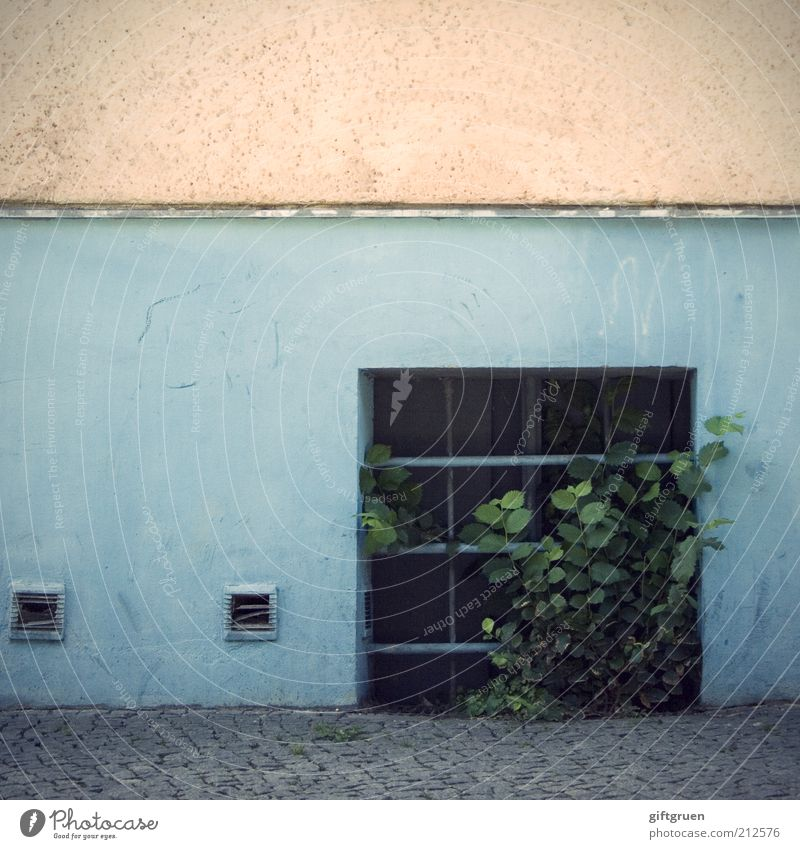 cellar child Plant Bushes Foliage plant Deserted House (Residential Structure) Manmade structures Building Wall (barrier) Wall (building) Facade Window Growth