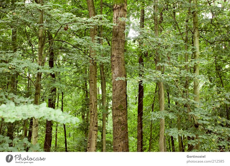 forest Environment Nature Climate Plant Tree Leaf Forest Green Tree trunk Deciduous forest Branch Climate change Colour photo Exterior shot Deserted Multiple