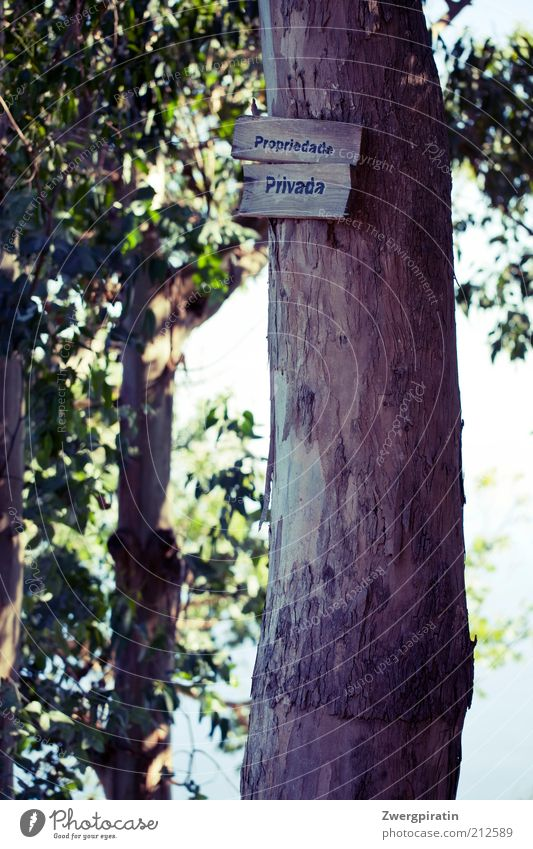 Nature Tree Plant Environment Signs and labeling Signage Tree trunk Real estate Private Foliage plant Private sphere