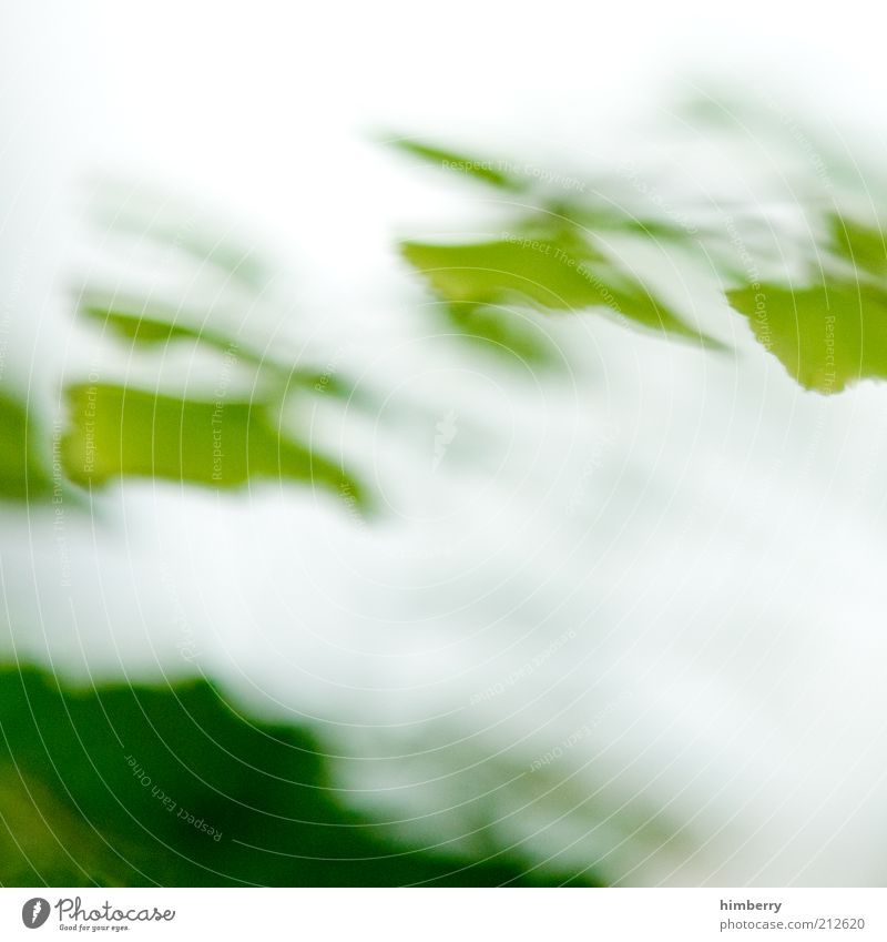 Nature Green Plant Leaf Background picture Environment Fresh Uniqueness Exceptional Distorted Patch of colour Abstract Leaf green