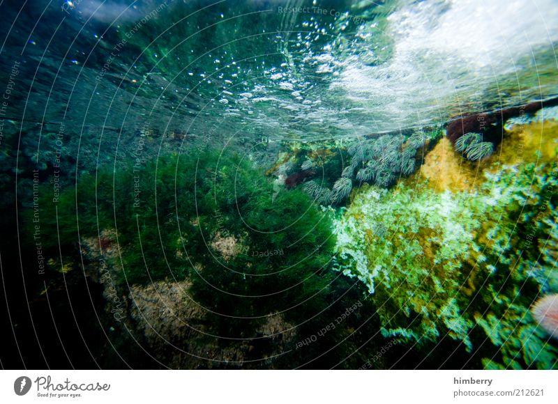 Nature Water Plant Environment Aquarium Multicoloured Reef Coral Detail Aquatic plant Freshwater Coral reef