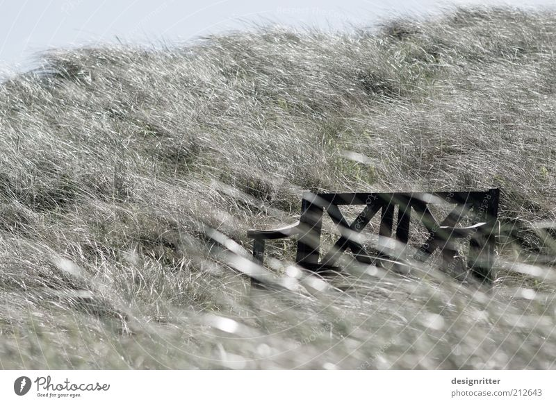 Plant Vacation & Travel Calm Relaxation Grass Freedom Air Wind Weather Break Bench Romance Peace Leisure and hobbies Gale Beach dune