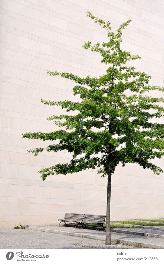 Tree Green Plant Summer Loneliness Wall (building) Wood Gray Stone Wall (barrier) Building Concrete Facade Growth Gloomy Bench