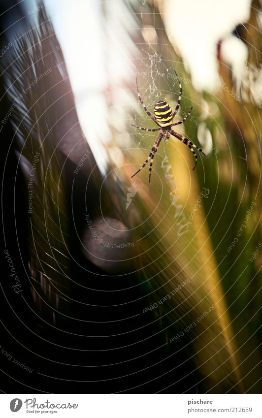 pure nature Environment Nature Plant Spider 1 Animal Sit Wait Esthetic Exceptional Threat Disgust Exotic Creepy Beautiful Curiosity Fear Timidity Respect