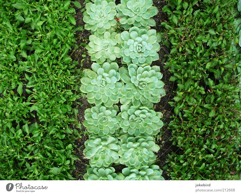 Green Plant Garden Earth 3 Ground Stripe Flag Under Striped Garden Bed (Horticulture) Foliage plant Copy Space left Leaf green Side by side Evergreen plants