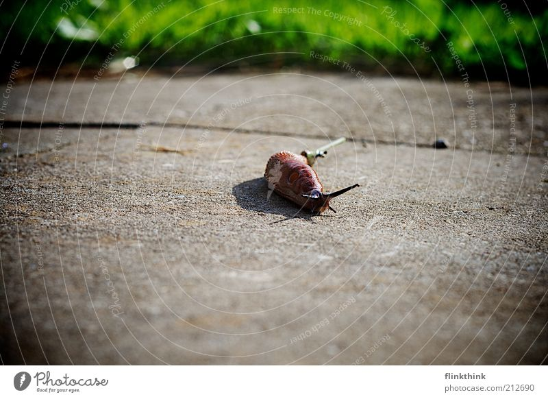 Nature Green Animal Grass Brown Going Environment Earth Simple Wild animal Disgust Snail Crawl Slimy Mollusk