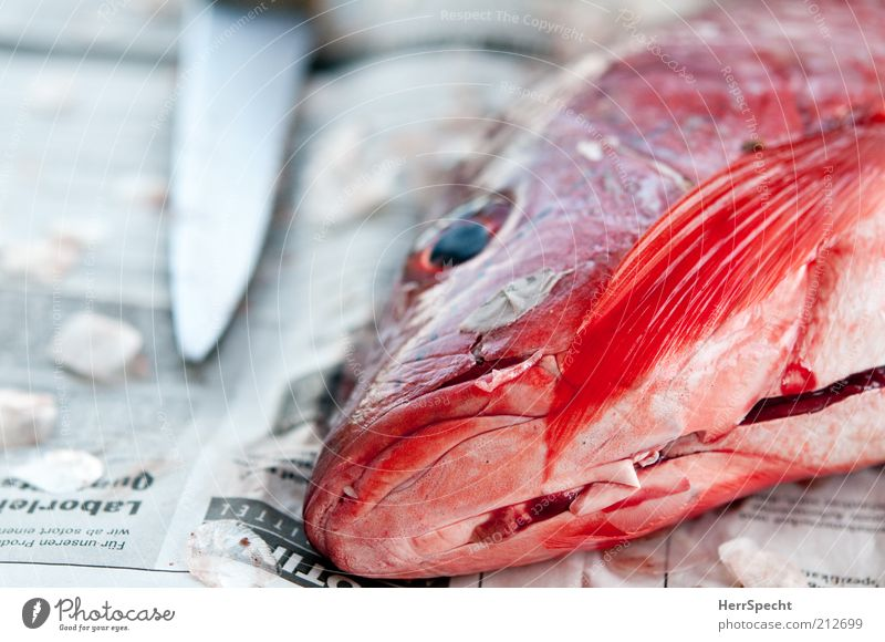 Red & dead Food Fish Knives Animal Wild animal Dead animal 1 Paper Glittering Beautiful cadaverous slashed Sliced Fin Newspaper Hide Eyes Colour photo