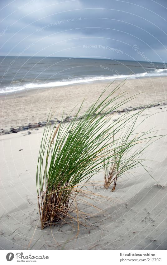 Nature White Ocean Green Blue Plant Beach Clouds Far-off places Grass Gray Waves Horizon North Sea Foliage plant Sky