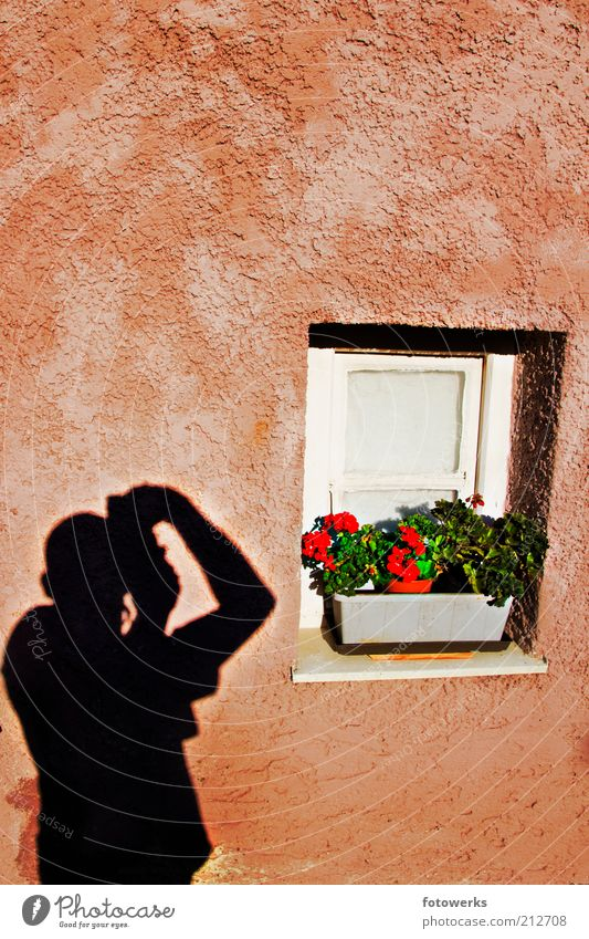 shadows on the wall Masculine Man Adults 1 Human being Art Artist Wall (barrier) Wall (building) Facade Window Make Esthetic Authentic Good Positive Calm