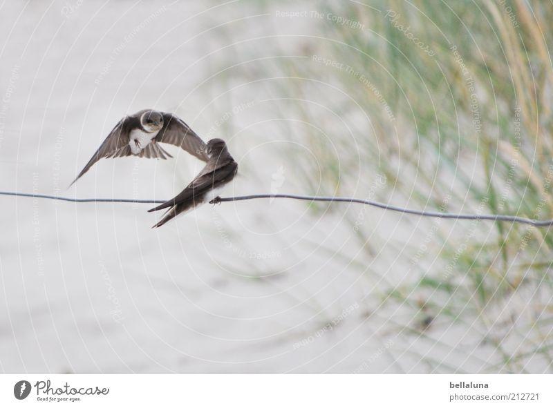 Vacation & Travel Plant Summer Ocean Animal Beach Coast Freedom Sand Bird Flying Weather Sit Pair of animals Wild animal Island